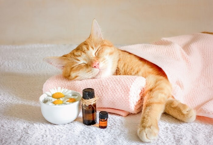 homeopathy for cats feature