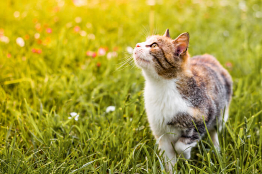 Indoor Vs. Outdoor Cats: Should You Let Your Cats Outside?
