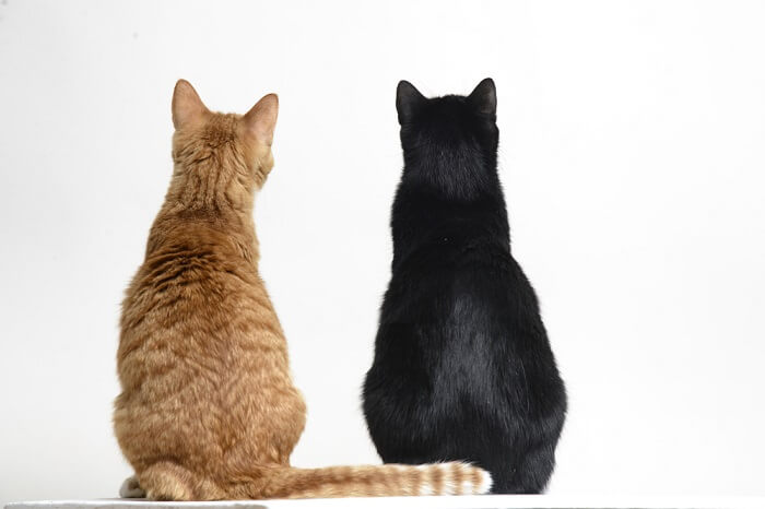 Osteoarthritis in cats featured image