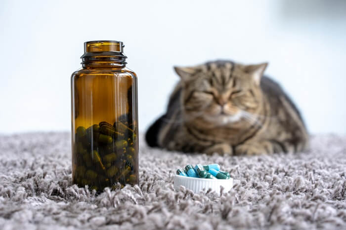 Cat sitting with a bottle of pills