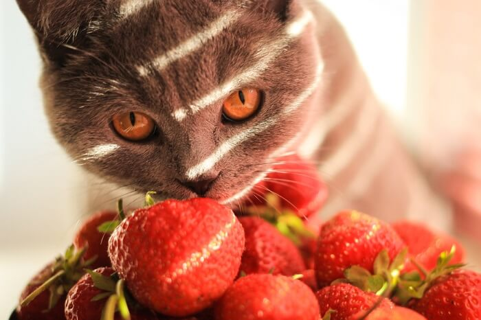 Cat with a pile of strawberries