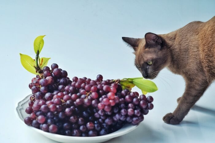 Can Cats Eat Grapes?