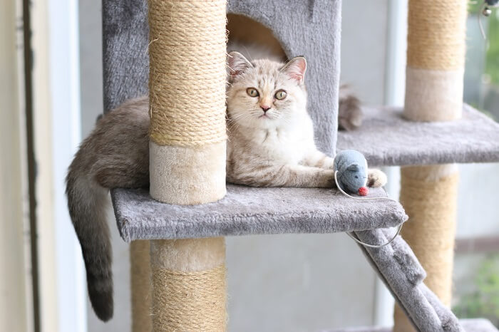 Cat sitting in a cat tree with a toy