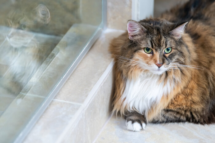 Cat lying on tile to stay cool