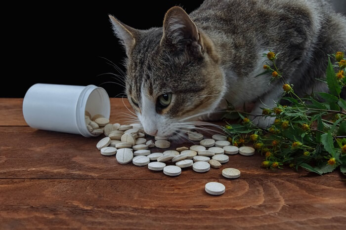 tylenol poisoning in cats feature