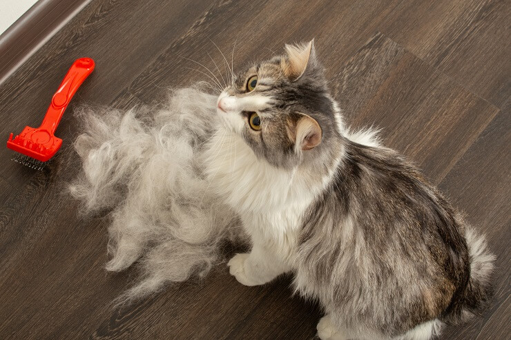 treatment of hair loss in cats