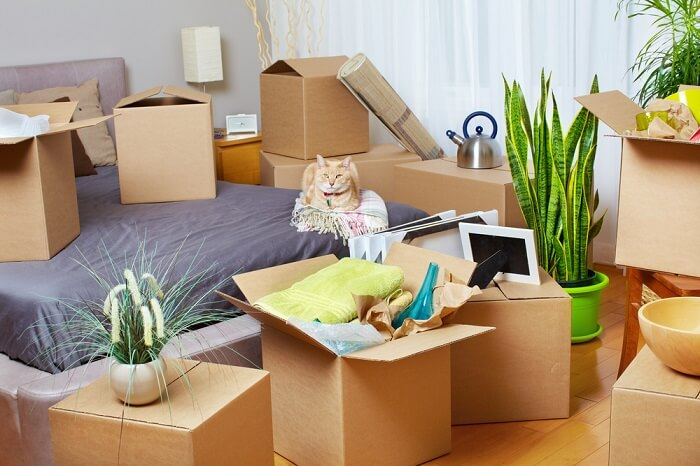 Cat sitting on a bed surrounded by boxes and plants