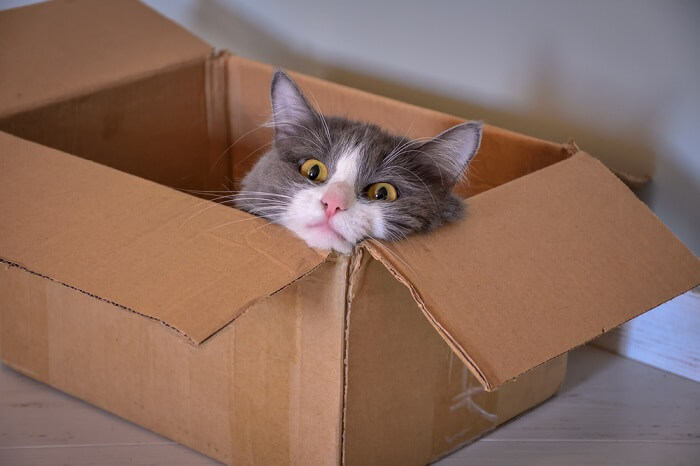 Moving with your cat featured image