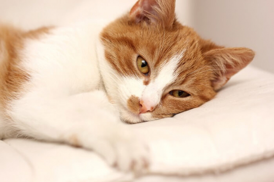 Alzheimer's In Cats: Causes, Symptoms & Treatment