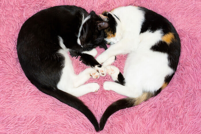 owning cats is good for your heart feature