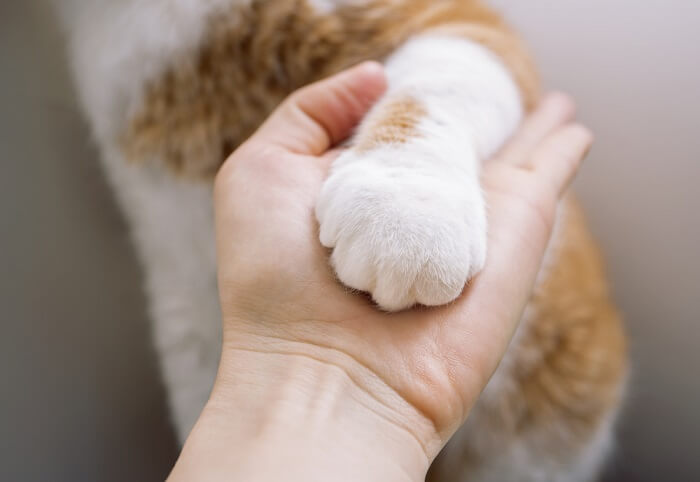 Cat paw in hand