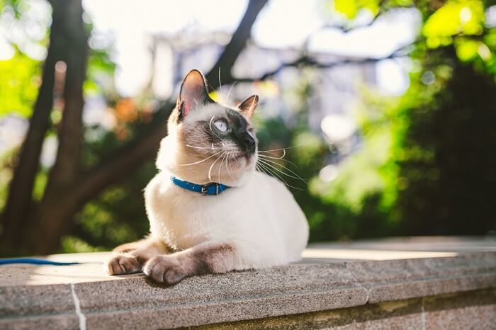 bone cancer in cats featured image