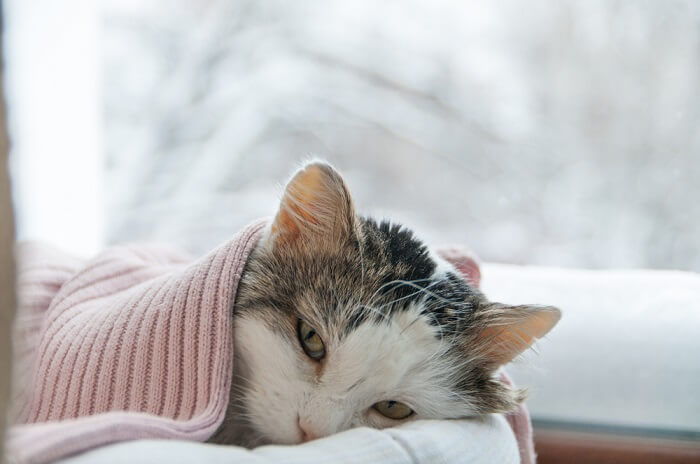 signs your cat is sick feature