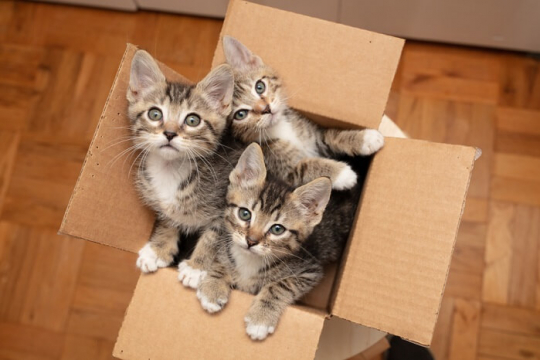 Fostering Cats: What You Need To Know?