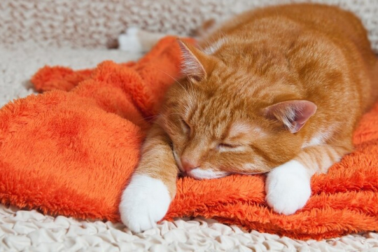 Lead Poisoning In Cats: Symptoms, Diagnosis & Treatment