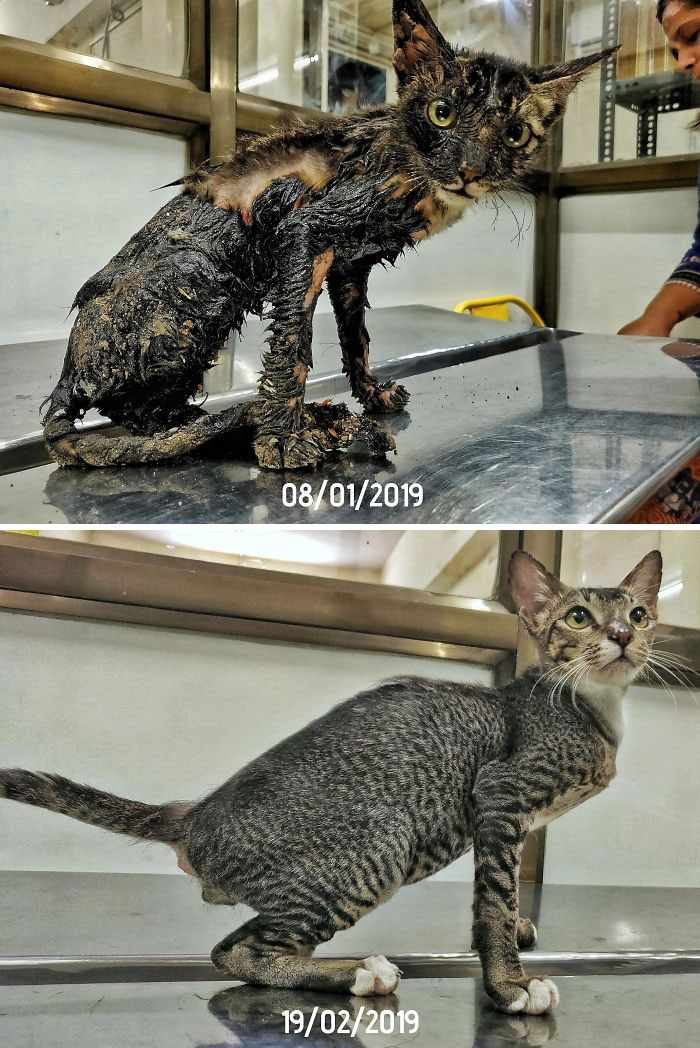 #10 When Phoenix was first brought to the shelter, his fur was covered with tar. After a month of love and a little grooming, Phoenix is now ready for adoption.
