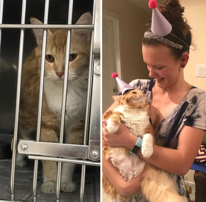 #6 Sela is always ready for a party, but she wasn't so happy a year ago. She was a lonely, flea-infested and underweight stray cat. But look what one year of pure loving can do. Today was her adoption anniversary and we had to celebrate!