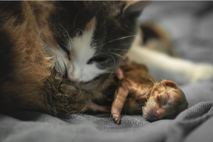 foster cat with kittens